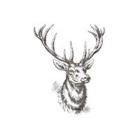 Big Buck 2 Fine-Art Print