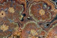Flowering Tube Onyx, Mexico 1 Fine-Art Print