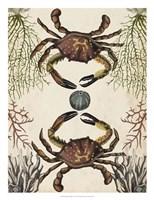 Antiquarian Menagerie - Crab Fine-Art Print