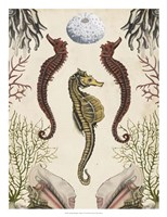 Antiquarian Menagerie - Seahorse Fine-Art Print