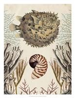Antiquarian Menagerie - Puffer Fish Fine-Art Print