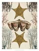 Antiquarian Menagerie - Starfish Fine-Art Print
