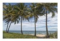 Beach Palms Fine-Art Print