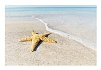 Star Fish Line of Surf Fine-Art Print