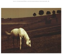 The White Horse Fine-Art Print