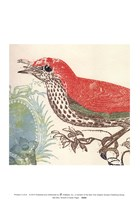 Red Bird Fine-Art Print