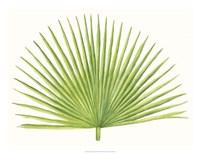Tropical Breeze Leaves III Fine-Art Print