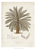 Antique Tropical Palm I Fine-Art Print