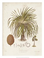 Antique Tropical Palm II Fine-Art Print