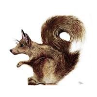 Foxysquirrel Fine-Art Print