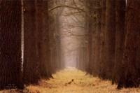 Yellow Path Fine-Art Print