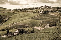 Tuscany Vineyard Fine-Art Print