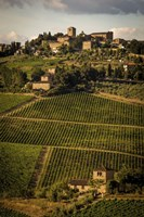 Tuscany Vineyard 02 Fine-Art Print