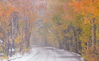 Snowy Road Fine-Art Print