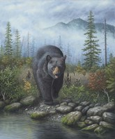 Smoky Mountain Black Bear Fine-Art Print