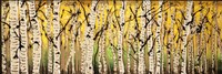 Panor Aspens Fall Begins Fine-Art Print