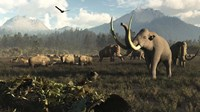 Columbian Mammoths And Bison Roam The Ancient Plains Of North America Fine-Art Print