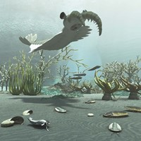 Animals And Floral Life From The Burgess Shale Formation Of The Cambrian Period Fine-Art Print