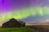 Purple Aurora over an old barn, Alberta, Canada Fine-Art Print