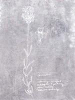 Essential Botanicals II Fine-Art Print