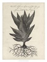 Thornton Succulents I Fine-Art Print