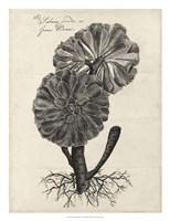 Thornton Succulents II Fine-Art Print
