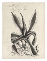 Thornton Succulents III Fine-Art Print