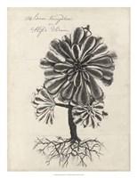 Thornton Succulents IV Fine-Art Print