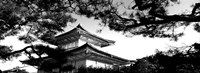 Low angle view of trees in front of a temple, Kinkaku-ji Temple, Kyoto City, Japan Fine-Art Print