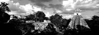 Ruins Of An Old Temple, Tikal, Guatemala BW Fine-Art Print