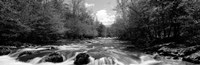 Little Pigeon River, Great Smoky Mountains National Park, Tennessee Fine-Art Print