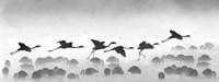 Flamingos landing, Kenya BW Fine-Art Print