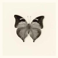 Butterfly VII Fine-Art Print