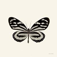 Butterfly VIII Fine-Art Print