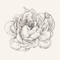 Pen and Ink Florals V Fine-Art Print