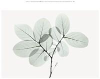 Myrtle Tree Fine-Art Print