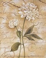 Calligraphy Peony Fine-Art Print