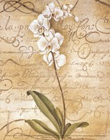 Calligraphy Orchid Fine-Art Print