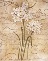 Calligraphy Narcissus Fine-Art Print