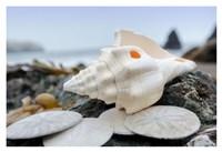 Crescent Beach Shells 11 Fine-Art Print