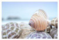 Crescent Beach Shells 15 Fine-Art Print