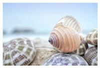 Crescent Beach Shells 15 Fine-Art Print