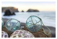 Crescent Beach Shells 16 Fine-Art Print