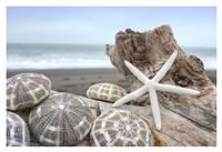 Crescent Beach Shells 5 Fine-Art Print