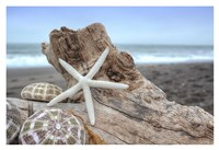 Crescent Beach Shells 6 Fine-Art Print