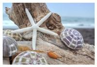 Crescent Beach Shells 7 Fine-Art Print