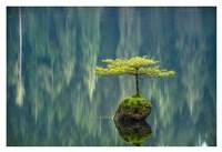 Fairy Lake Bonsai Fine-Art Print