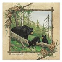 Black Bear & Cubs Fine-Art Print