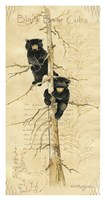 Black Bears Cubs Fine-Art Print