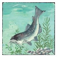 Catfish Fine-Art Print